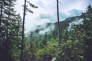 Forest trees and mountain landscape with low clouds on a rainy day in Canada