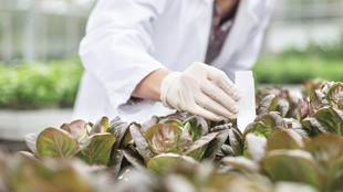scientist putting label in plants
