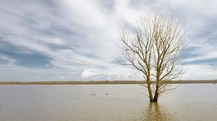 tree in flooded area